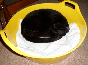 Cat Bed / Basket – 25L – Rainbow Trugs 25L Dish Trug. Made in Britain.