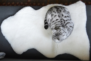 Cheshire & Wain Snow White Sheepskin Rug for cats. Made in England.