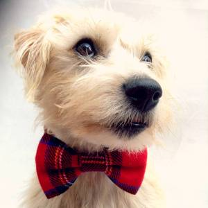 Christmas Tartan Pet Bow Tie by PUP TART HANDMADE. Made in Britain.