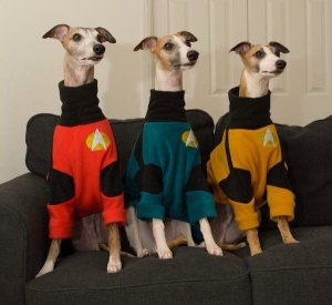 Star Trek Fleece Jumpers for dogs. Made in England by Forest Fleece